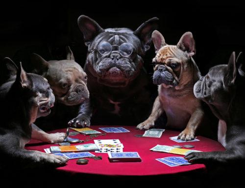 Er du den nye lederen? Spill kortene dine, men helst ikke Idioten